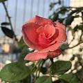 美丽的鲜花和美丽的珠宝一样,都是令人赏心悦目的东西